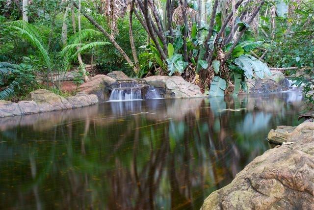 Pretoria Botanical Gardens