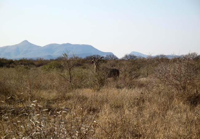 Thabazimbi